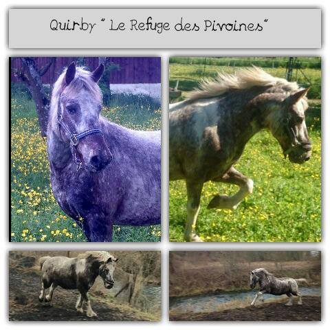 Quirby, poney apaloosa dep55 12167710