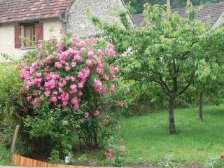 bricolage jardin Dscn1710