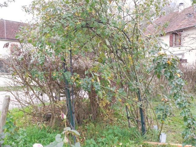 bricolage jardin Dscn2110