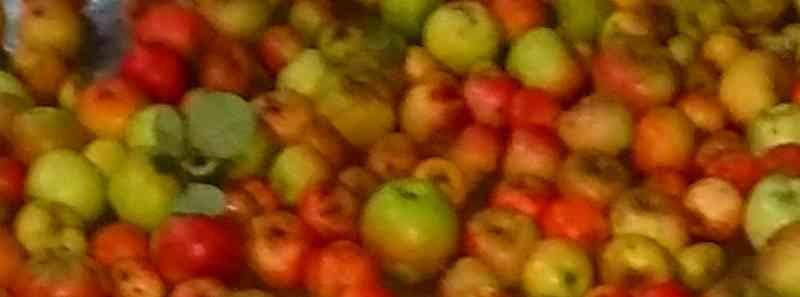Pressoir, jus de pommes et cidre… 010