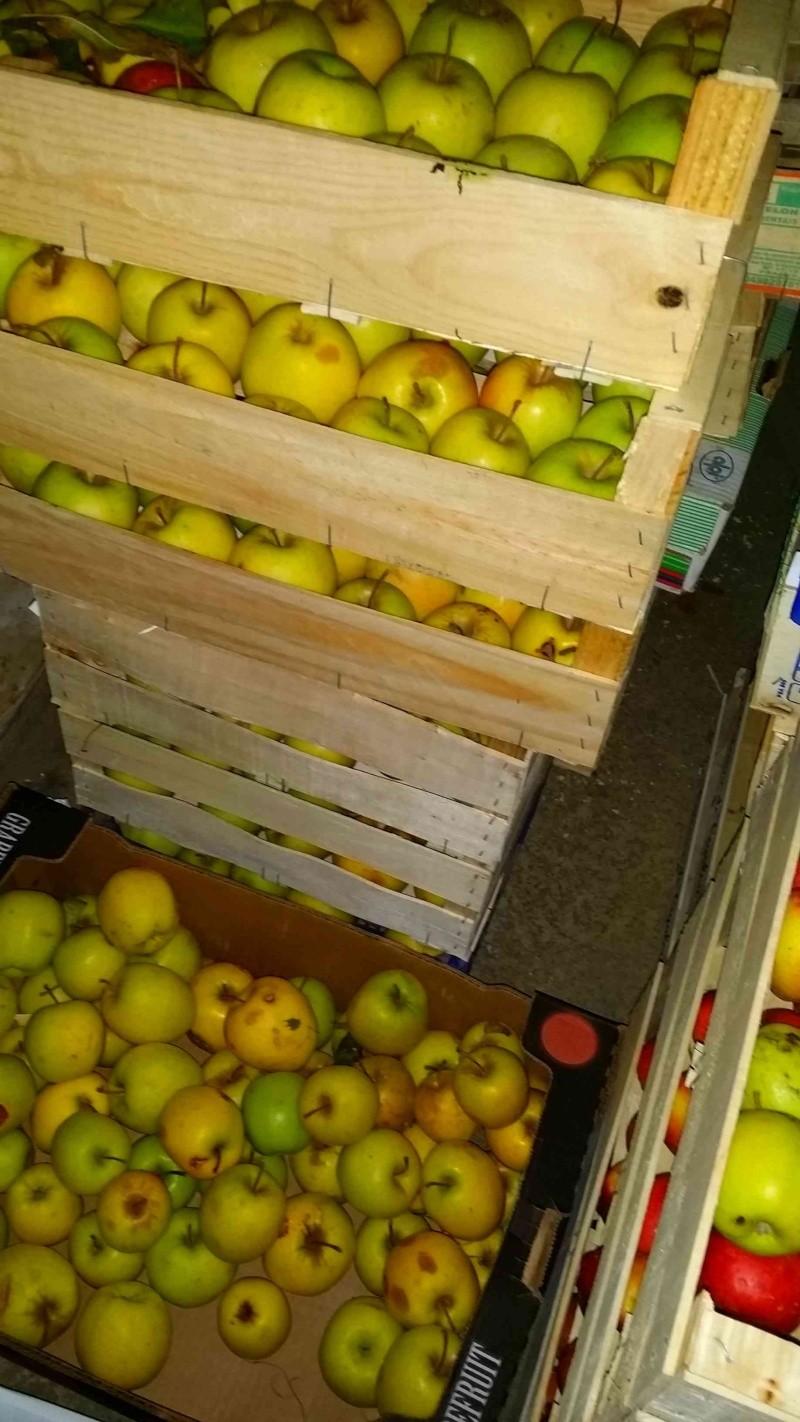 Pressoir, jus de pommes et cidre… 610