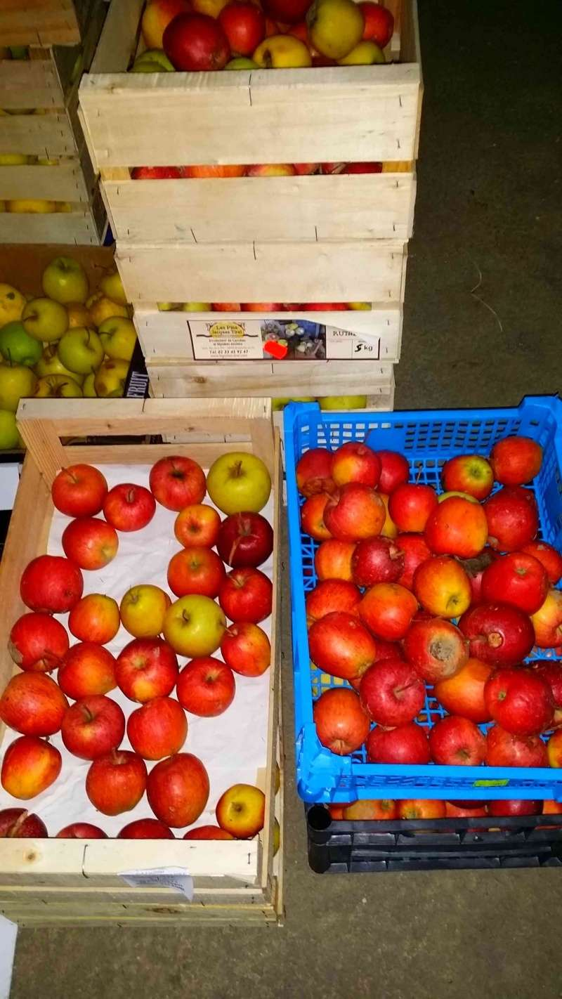 Pressoir, jus de pommes et cidre… 710