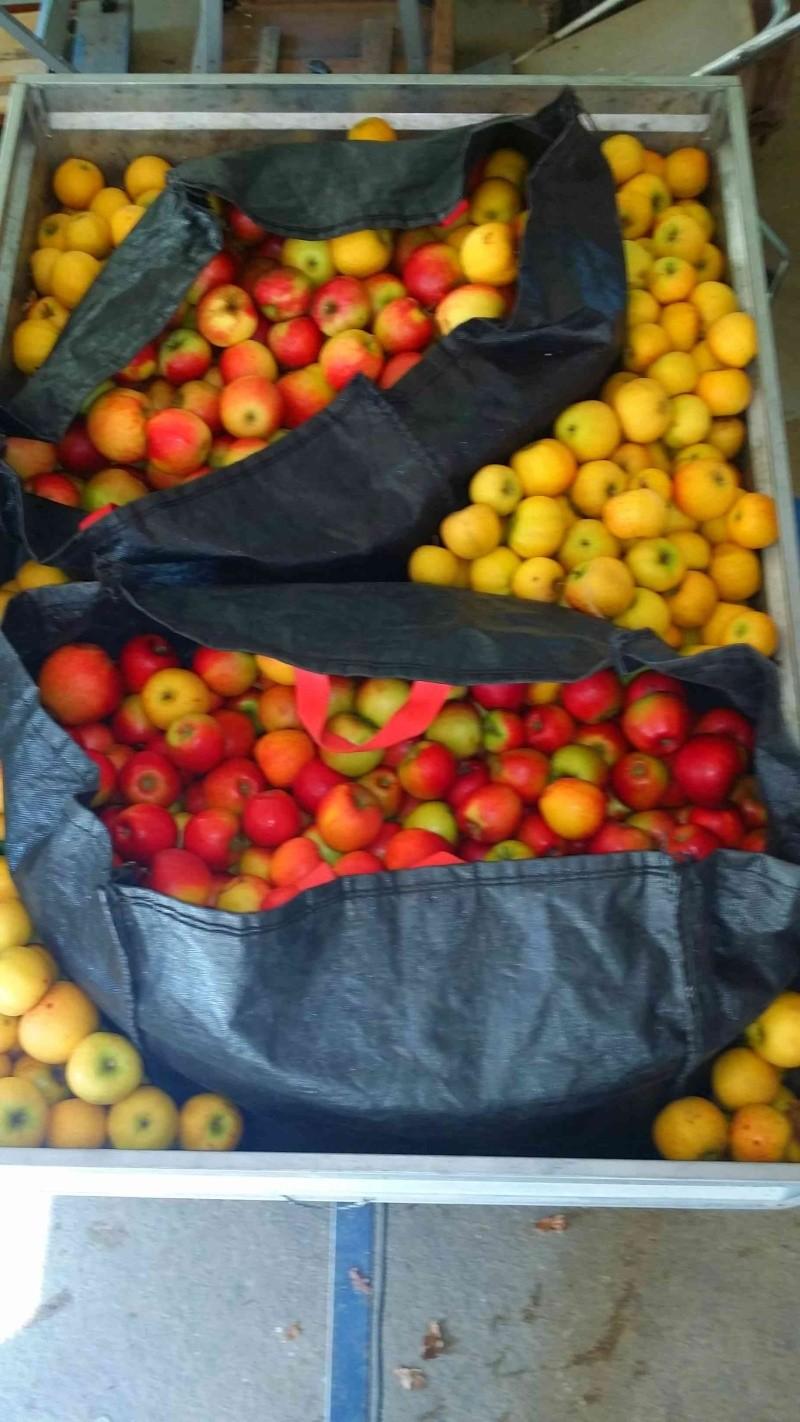 Pressoir, jus de pommes et cidre… 810