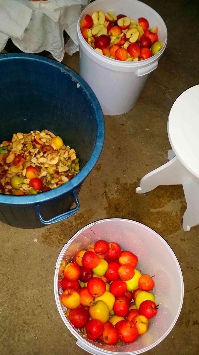 Pressoir, jus de pommes et cidre… 910
