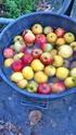Pressoir, jus de pommes et cidre… 1010