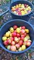 Pressoir, jus de pommes et cidre… 510