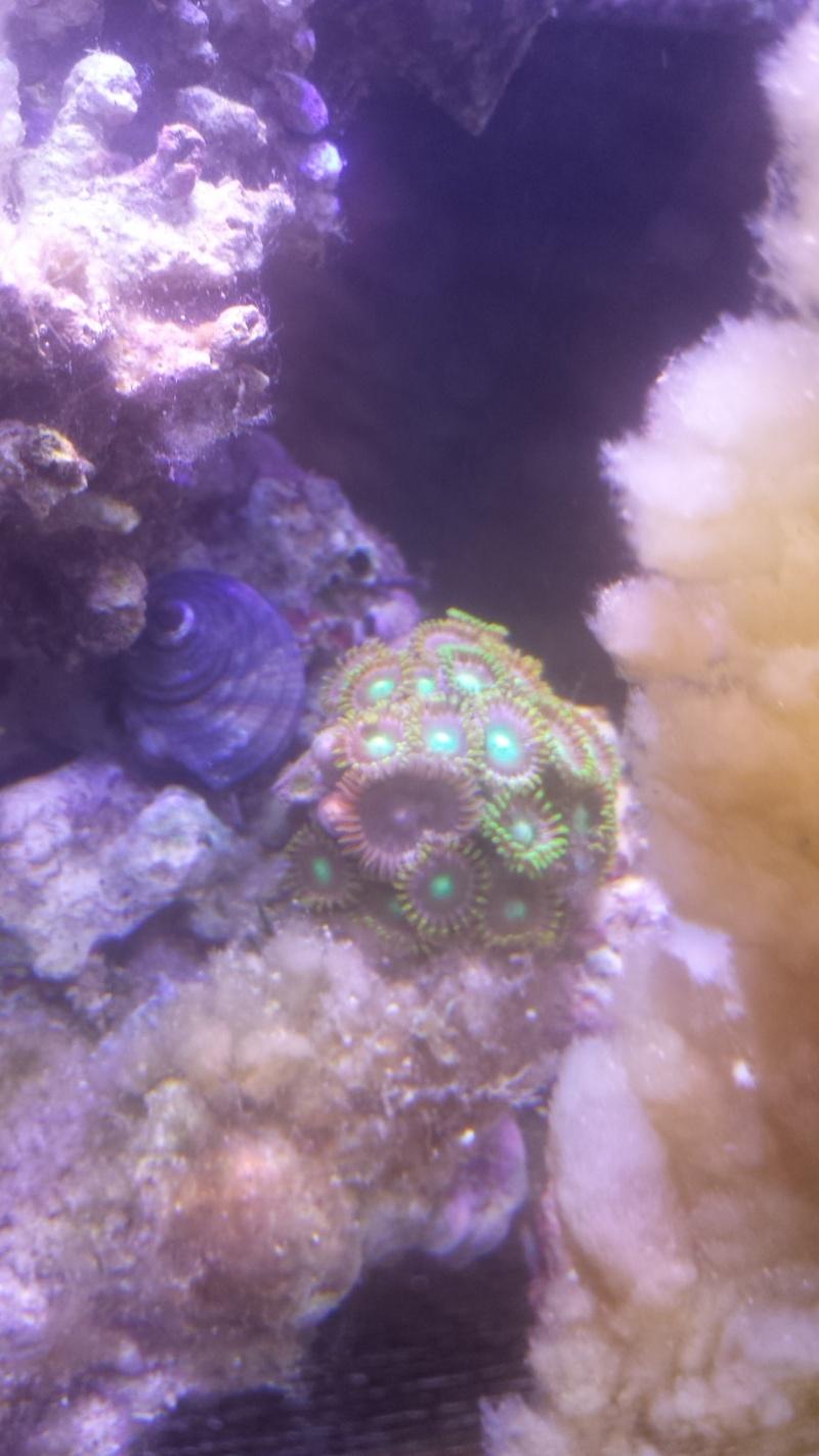 Mon nano récif de 30 L 20160114
