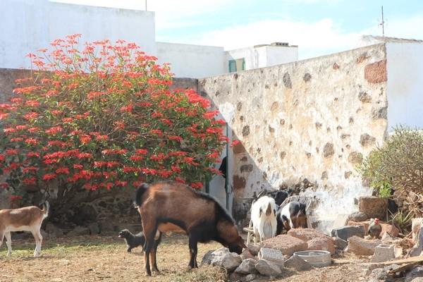 Espagne - Lanzarote - Page 2 Lanzar25