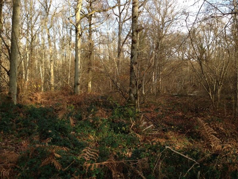 Forêt de Rambouillet: Le domaine de la Claye. Img_3827