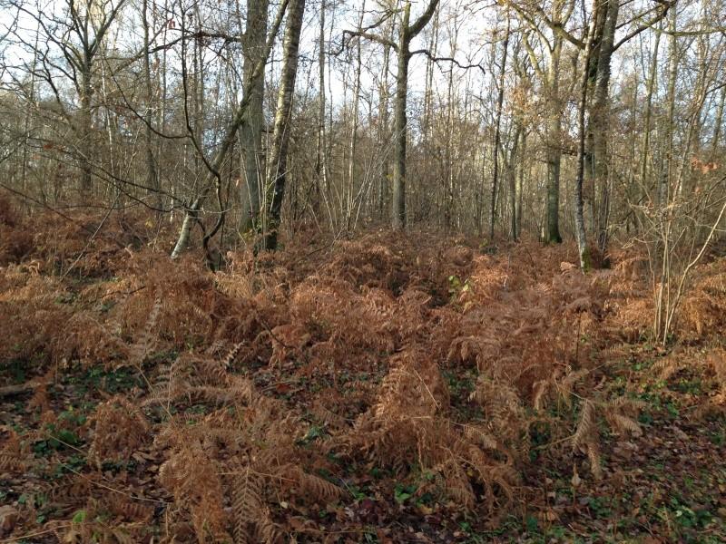 Forêt de Rambouillet: Le domaine de la Claye. Img_3828