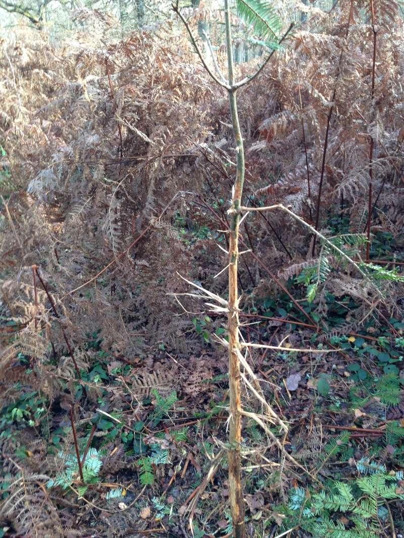 Forêt de Rambouillet: Le domaine de la Claye. Img_3834
