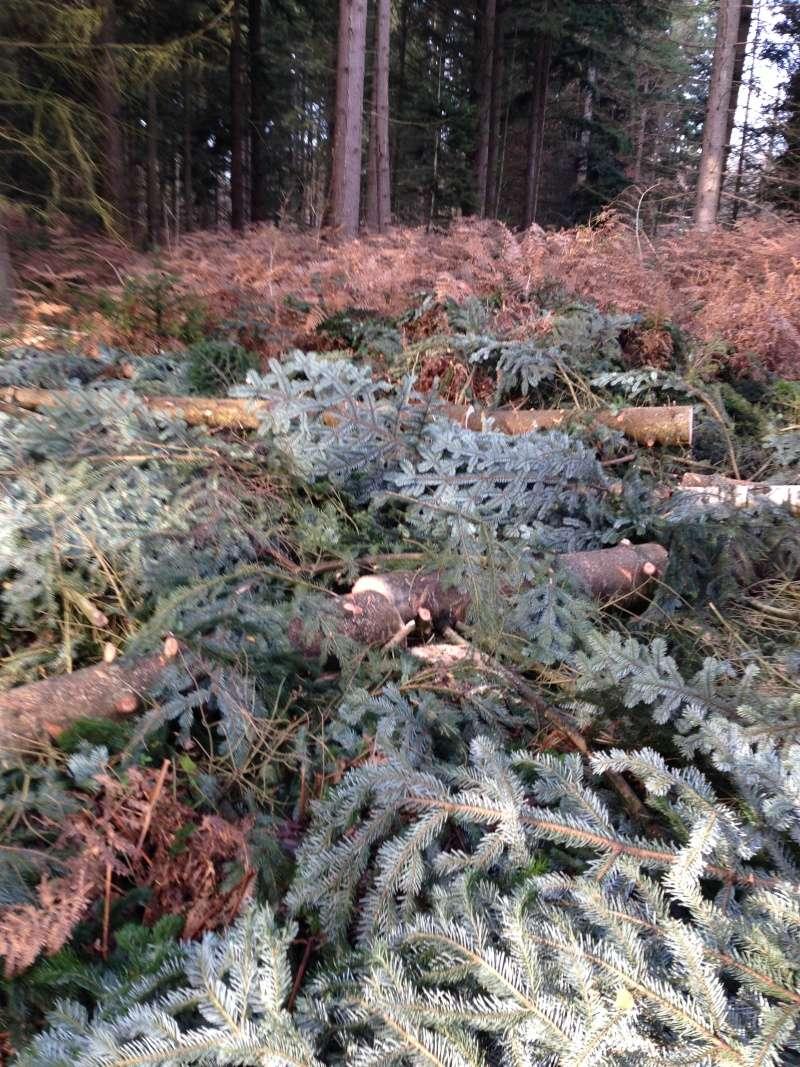 Forêt de Rambouillet: Le domaine de la Claye. Img_3835