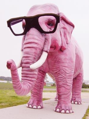 après la poésie du jeudi et les pashmen voici le zoo en folie Elepha10