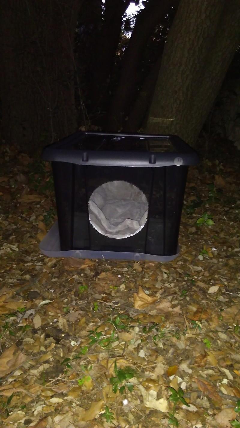 Créer un abri contre l'hiver pour les chats errants Cabane10