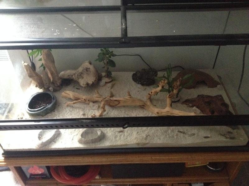 Ma famille de reptiles ! Img_4611