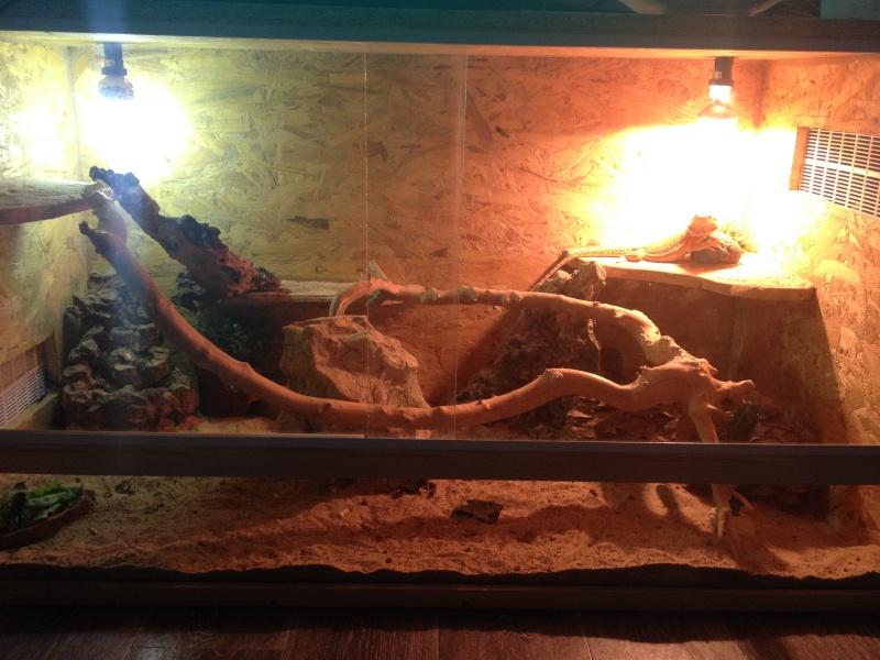 Ma famille de reptiles ! Img_4710