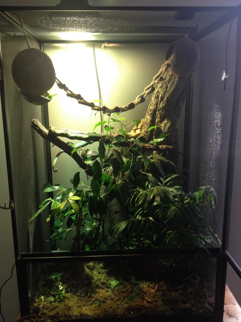 Ma famille de reptiles ! Img_4714