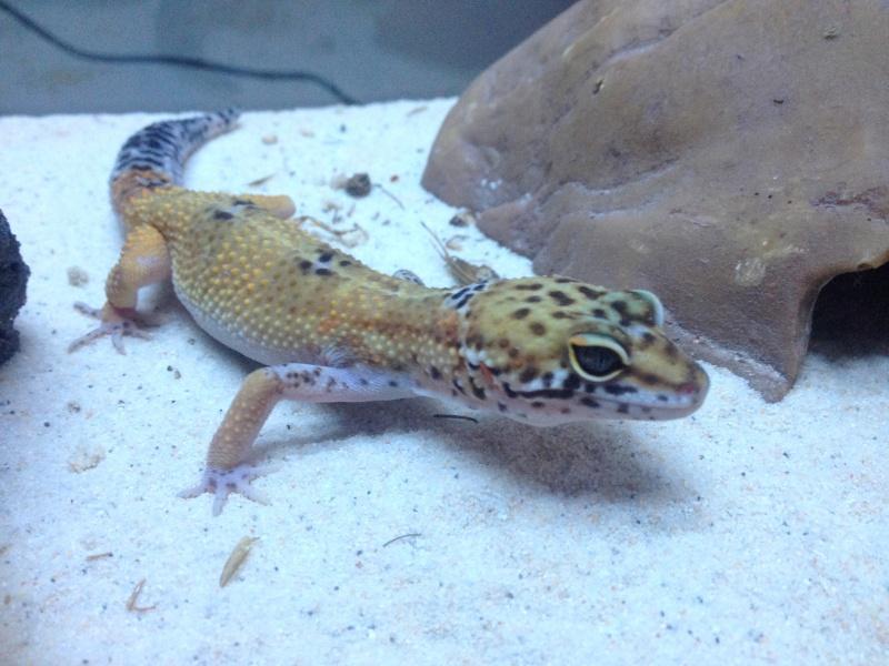 Ma famille de reptiles ! Img_4715