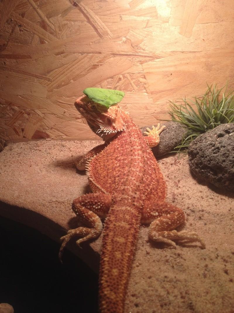 Ma famille de reptiles ! Img_4717
