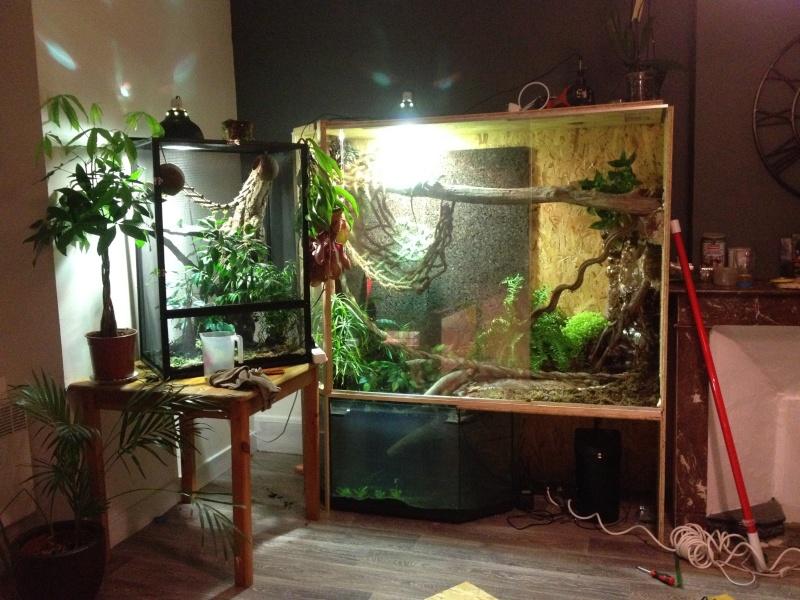 Ma famille de reptiles ! Img_4719