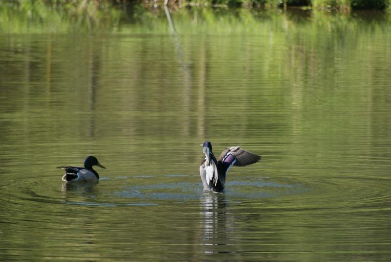 Vos plus belles rencontres avec la nature - Page 36 Dsc02711