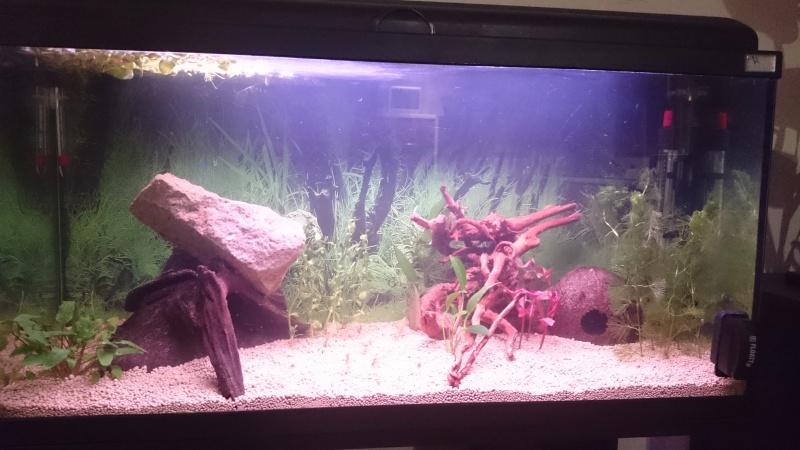 plantes qui meurent dans un nouveau aquarium 90l10