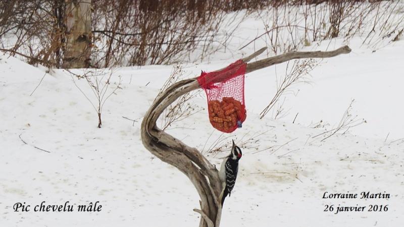 Belle branche hi hi hi... New_br11