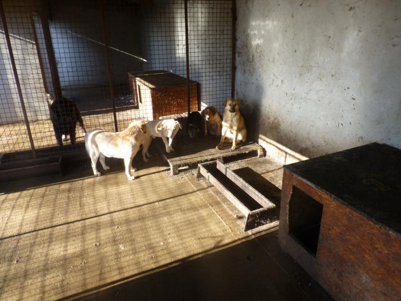 chien109 - CHIEN109, X TECKEL F, née ?, taille petite (Fourrière BACKA) - URGENT 10710910