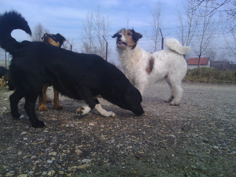 HOPE 4, F-X Fox, handicapée, née 2011 (Etela) - Prise en charge Association Enfin le Bonheur Hope610