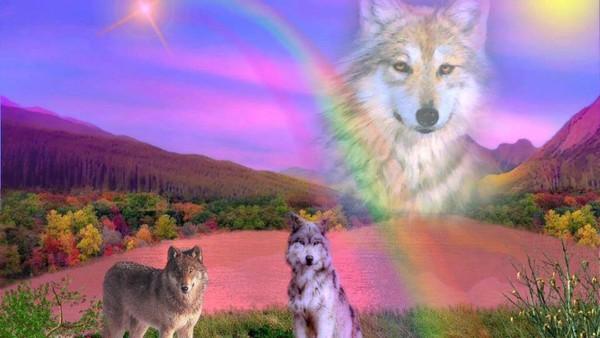 Hommage à DIESEL/MALIKO - chienne du RAID Berger11