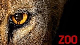 Séries Télé US - Page 6 Zoo10