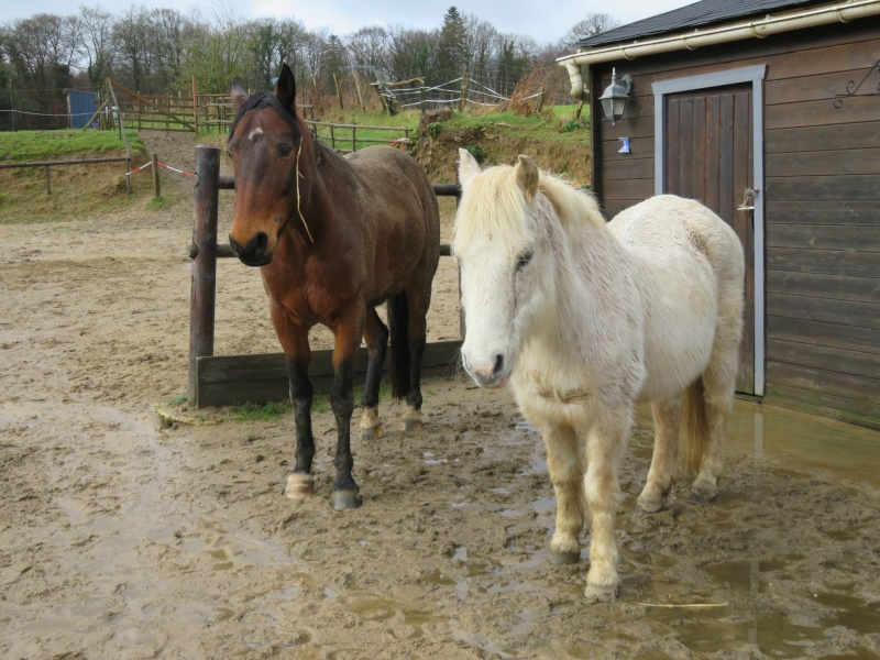 TRIVOLITE dite TULIPE - poney née en 1985 - adoptée en mai 2012 par Malou50 - Page 2 Img_1028