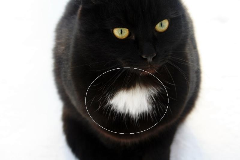 Хлопнуть по попке кота - Страница 2 Rjnbr10