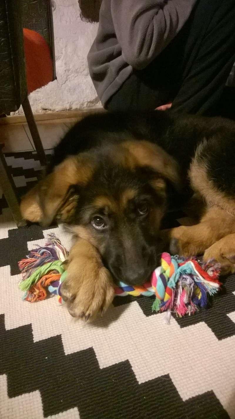 Trouvé !!!!! recherche covoiturage  pour chien (chiot BA) de Vendes (14) à Iffendic (35)  Wp_20114