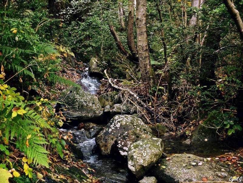 Le ruisseau P1030423