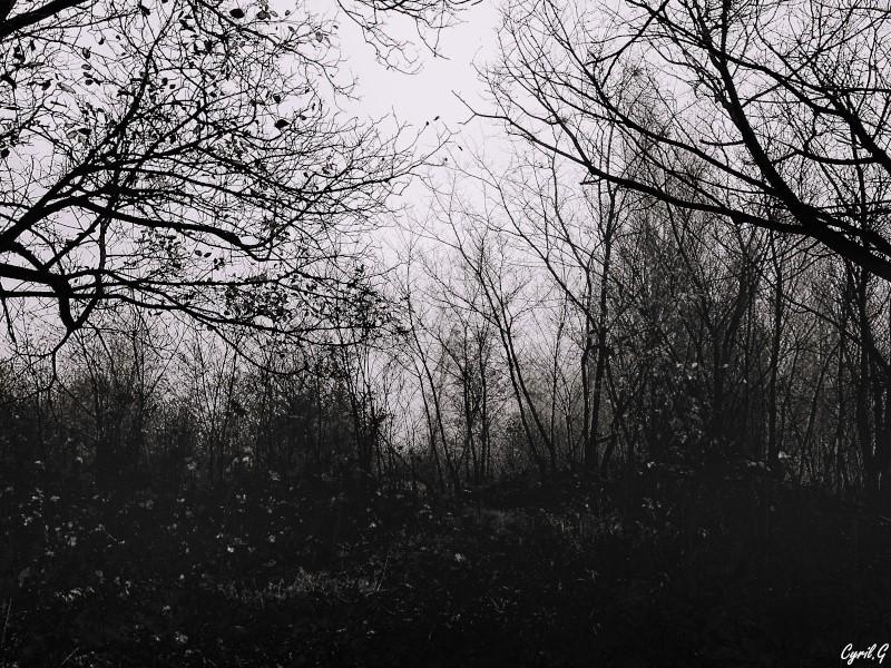 Matin brumeux en sous bois. P1030519