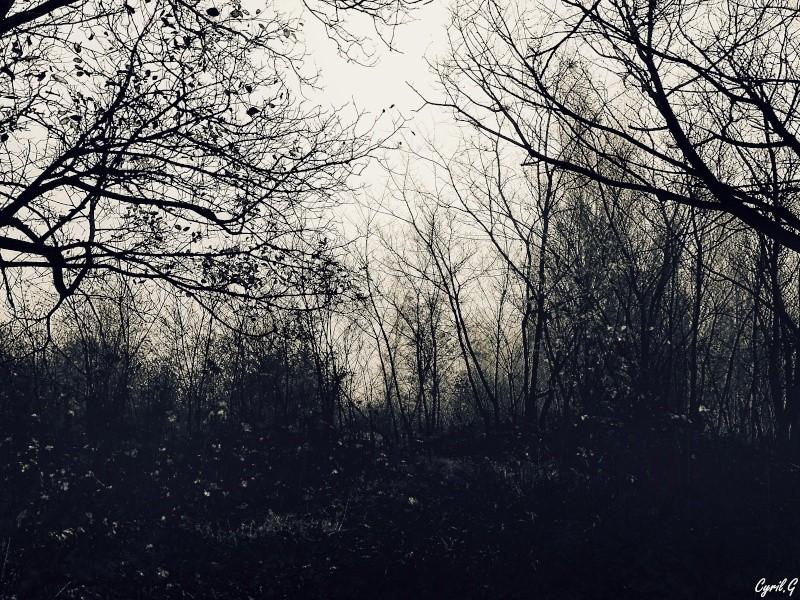 Matin brumeux en sous bois. P1030521
