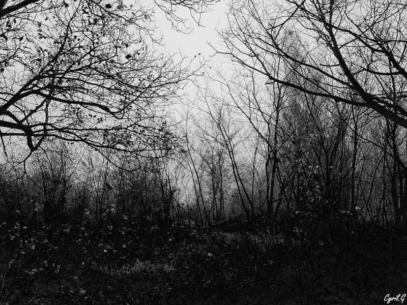 Matin brumeux en sous bois. P1030523