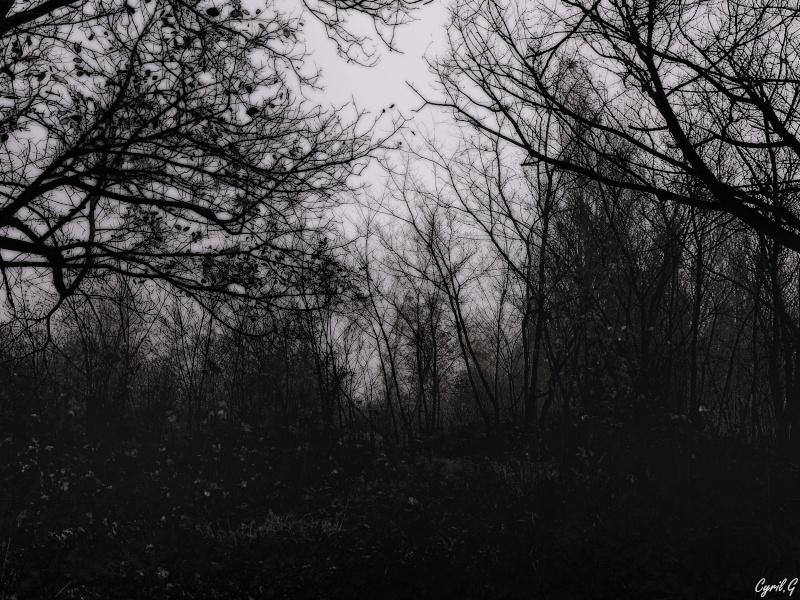 Matin brumeux en sous bois. P1030524