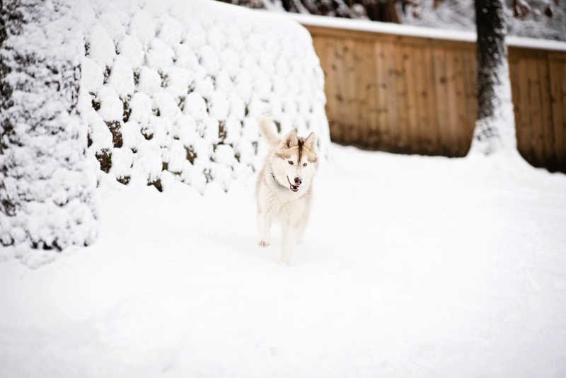 Rowan - My redheaded rescue. [updated 1/22 FIRST SNOW!] - Page 2 Olp_1310