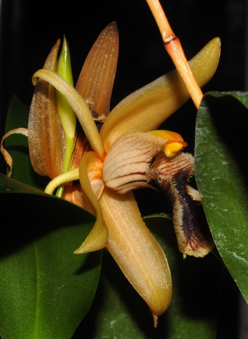 les orchidées du val d'Yerres 2015-114