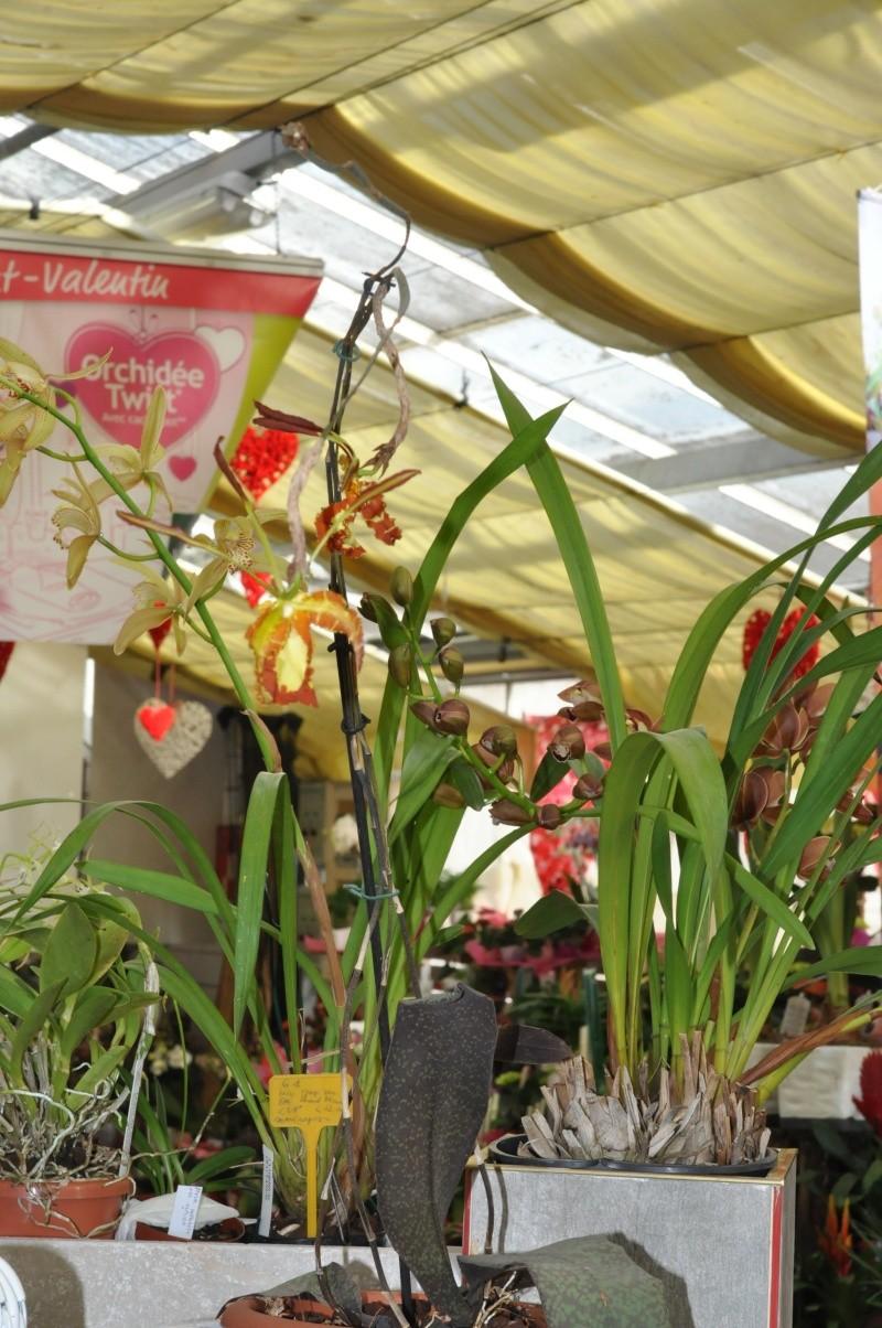 mes orchidées en représentation 2016-028