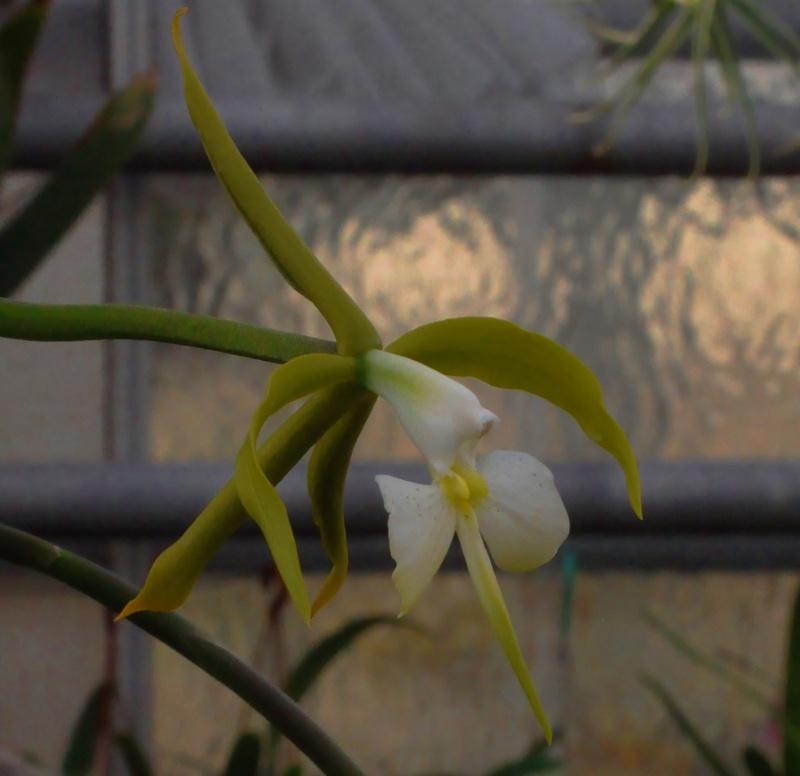 les orchidées du val d'Yerres Epiden10
