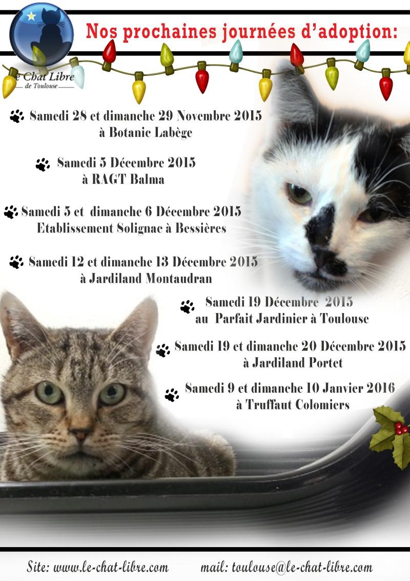 Le planning 2015 des journées adoption Affich11