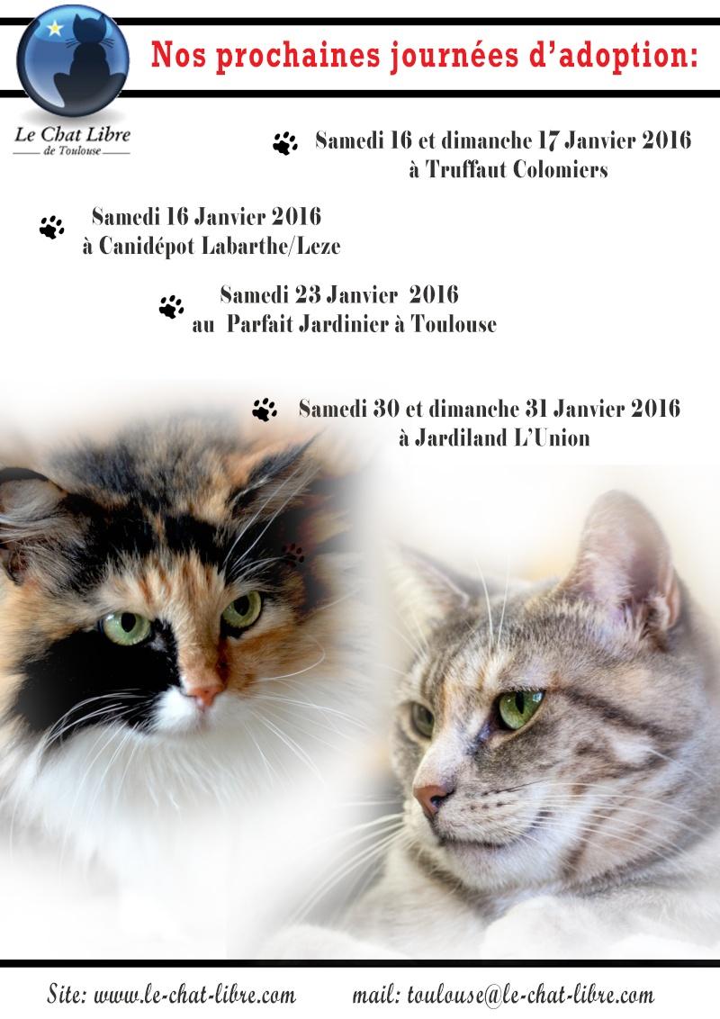 Le planning 2016 des journées adoption Journy11