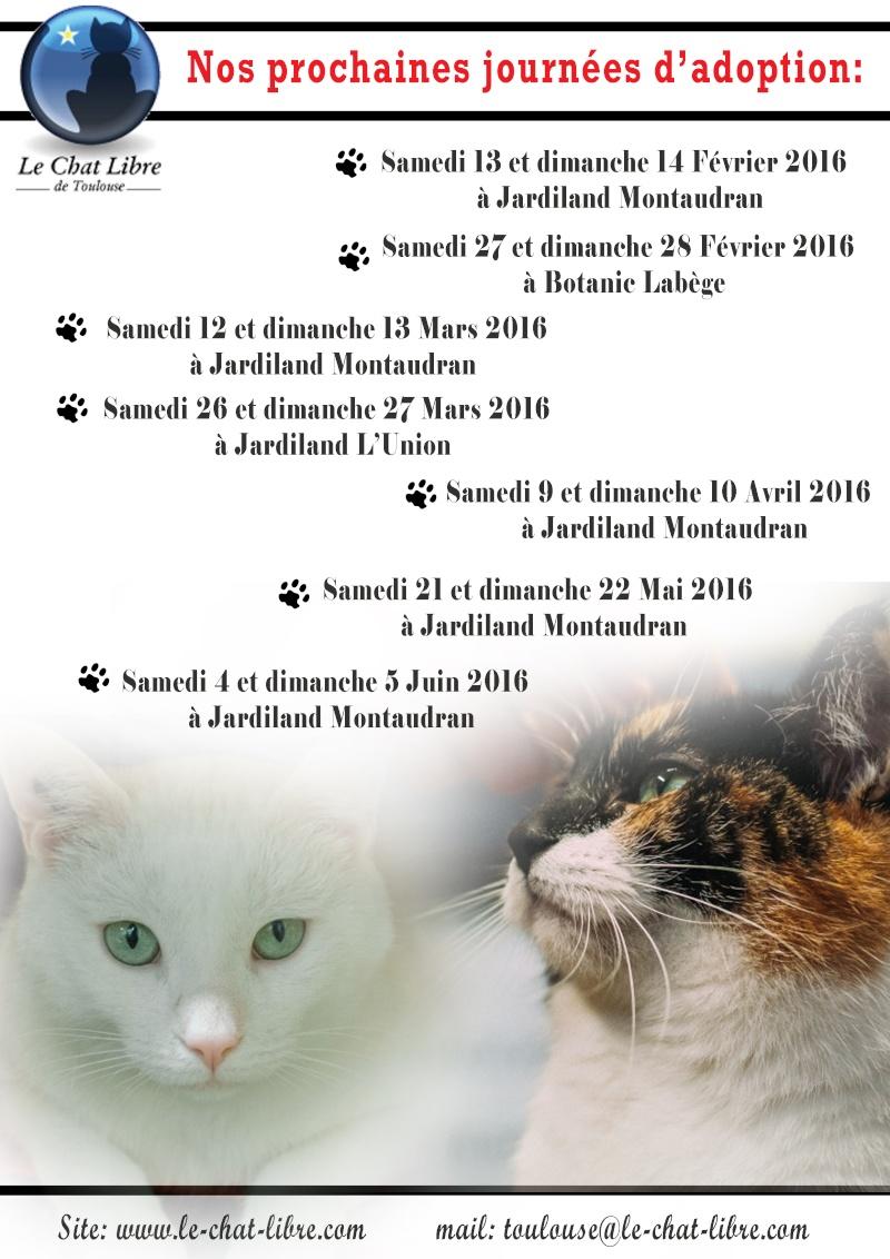 Le planning 2016 des journées adoption Journy13