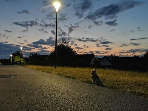 Oréo mon pitre ( Yorkshire terrier) - Page 6 11732310