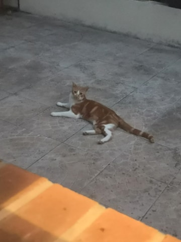 Le chaton/chat du jardin^^ 11737810