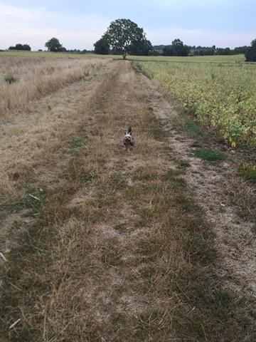 Oréo mon pitre ( Yorkshire terrier) - Page 7 11743310