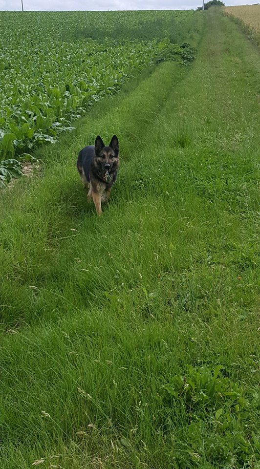 "OREO Ma "" petite souris "" lol ( Yorkshire Terrier) :) - Page 3 35463511"